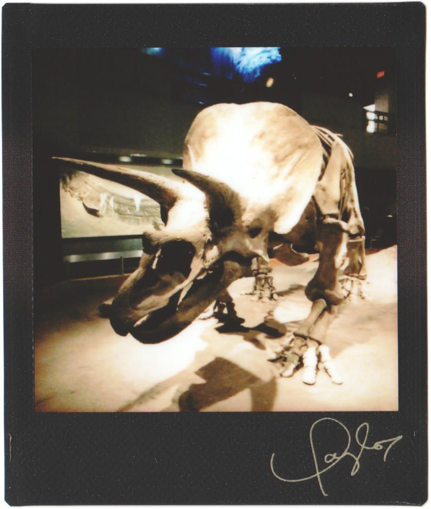 triceratops dinosaur fossil skeleton