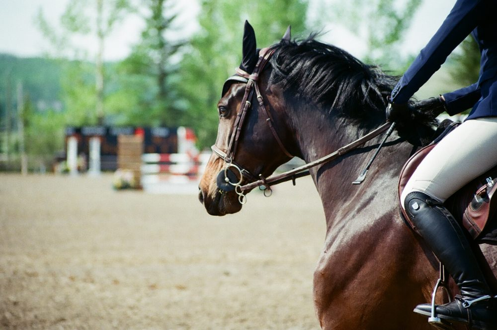 show jumping at Spruce Meadows, Calgary, AB