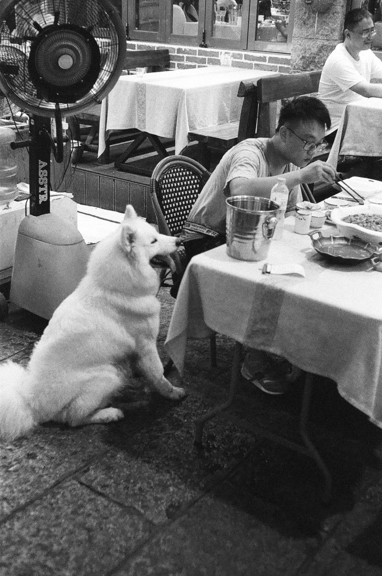 a dog patiently waits to be fed in Yangshuo, China