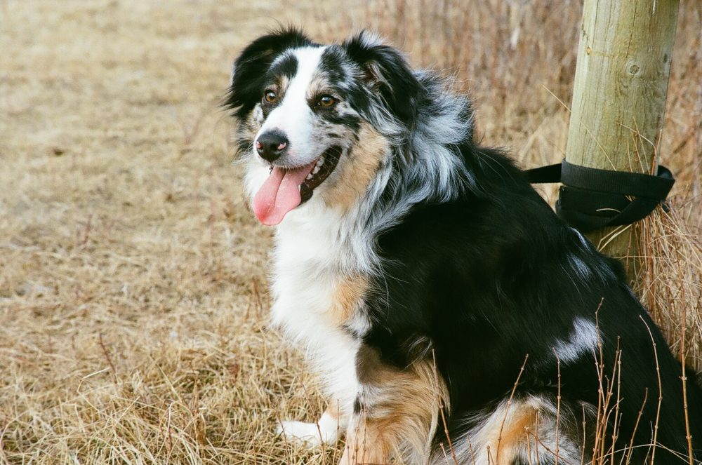 dog at Glenbow Ranch Provincial Park