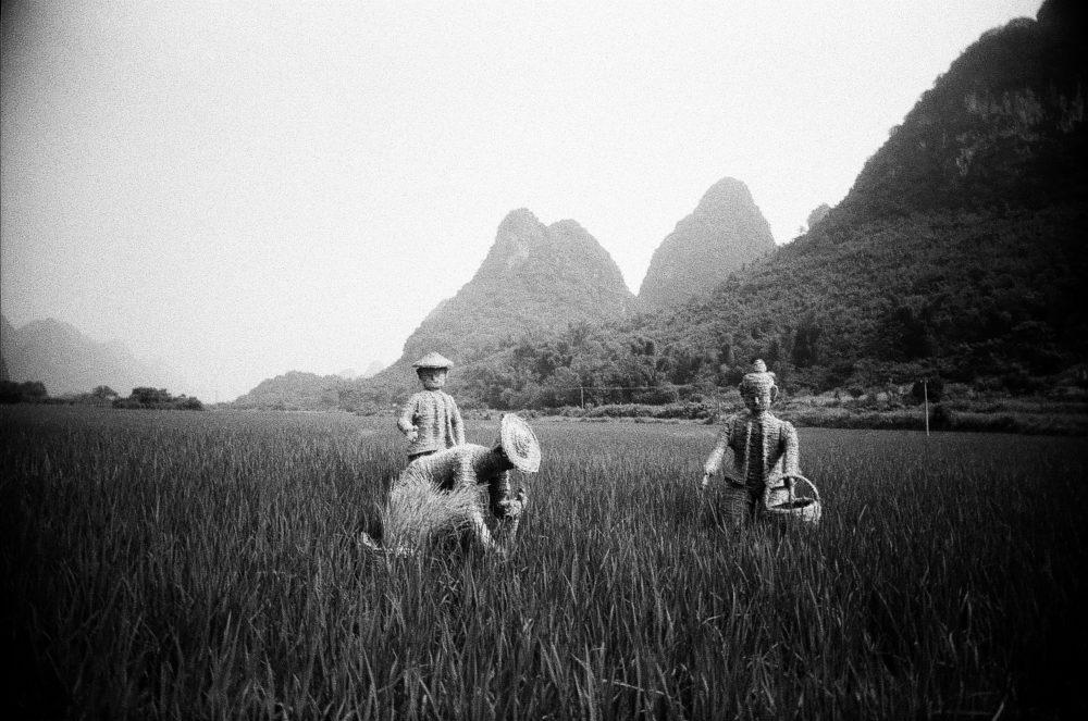 Yangshuo countryside wicker farmers on Double-X 5222 film