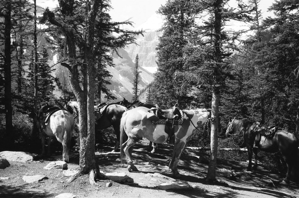 horses at the Lake Agnes Teahouse