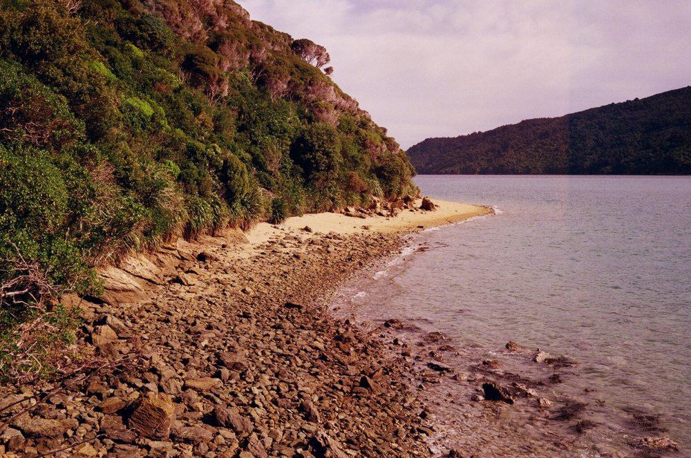 Motuara Island, NZ