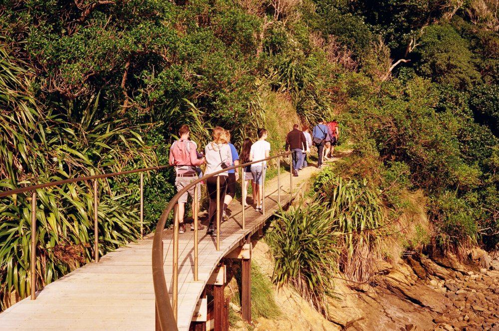 hiking up Motuara Island, NZ