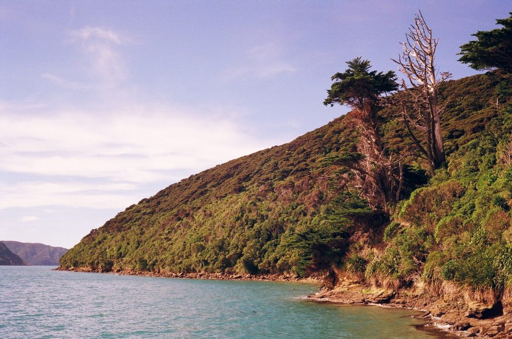 Motuara Island coastline, NZ