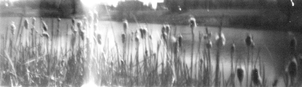 pinhole photo of cattails